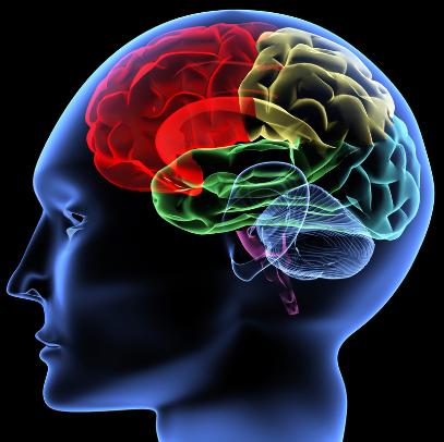 Hypnose in der Forschung